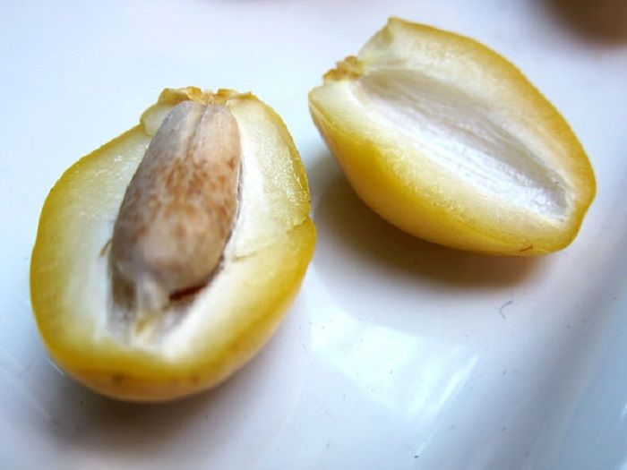 Daging buah kurma segar