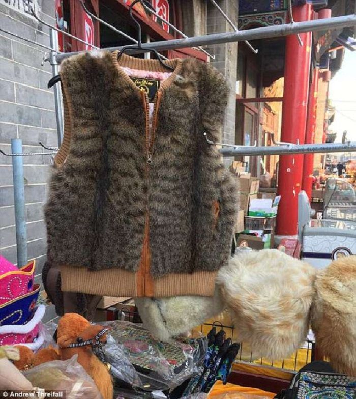 Jaket kulit kucing digantung