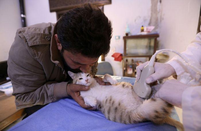 Dengan lembut, Jaleel 'menemani' pasien kucing yang sedang menjalani USG.