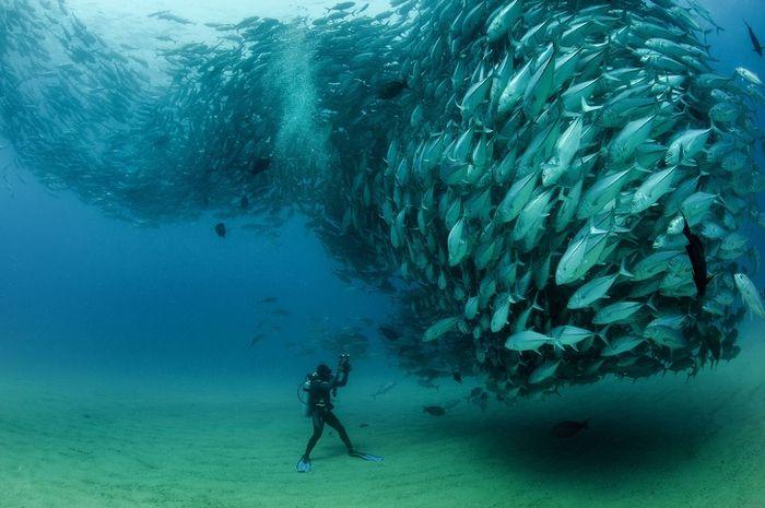 Foto yang menunjukkan kekuatan alam