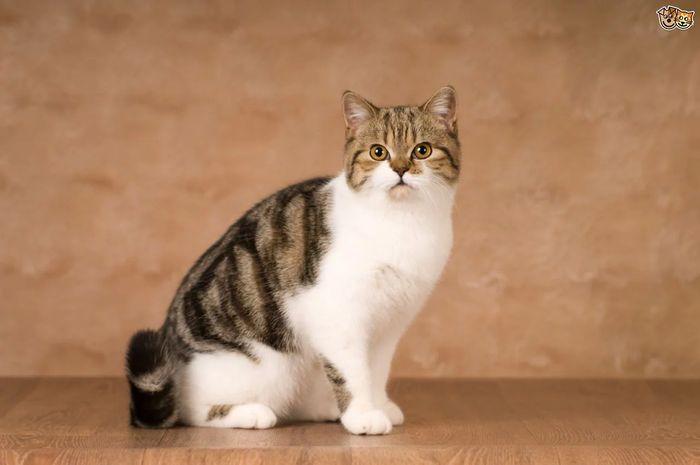 bulu kucing   dok. pets4homes.co.uk