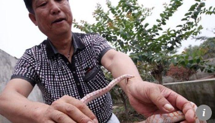 Pria yang membudidayakan ular pertamakali.