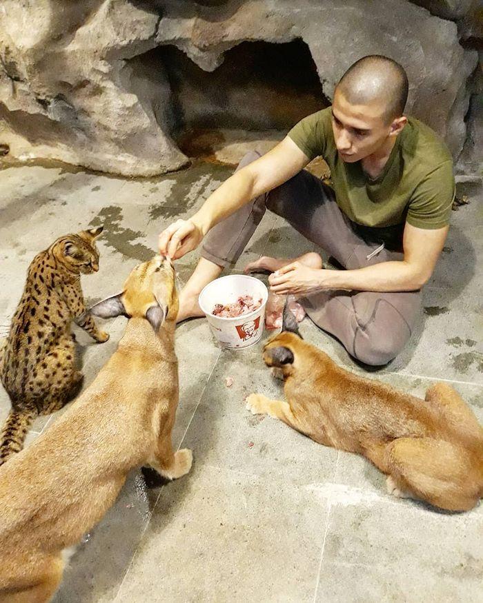 Fardhan memberi makan kucing-kucingnya dengan daging ayam segar