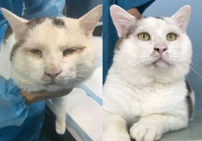 Perubahan wajah kucing.