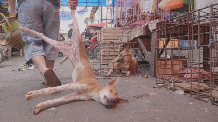 Pasar hewan di Tomohon.