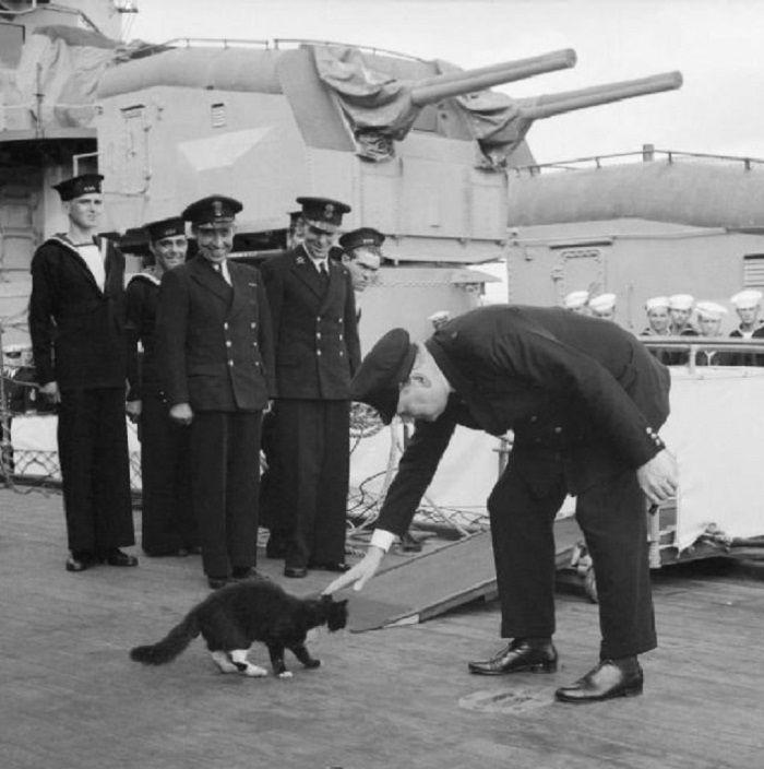 Winston Churchill membelai seekor kucing  kapal HMS Prince of Wales pada 1941
