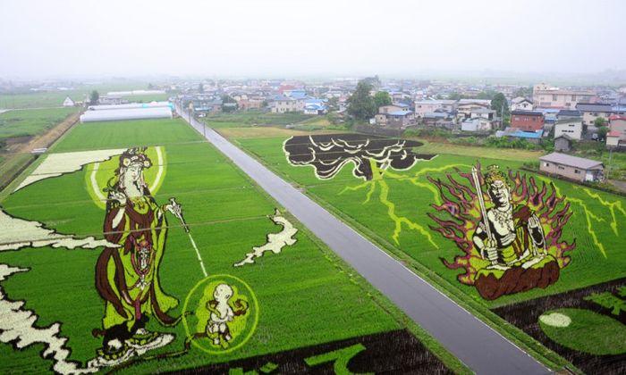 Tanbo Art, seni melukis sawah dengan padi warna warni