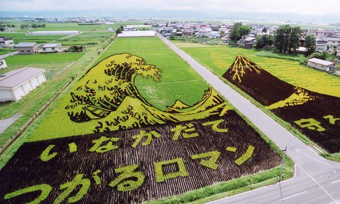 Tanbo Art, seni melukis sawah dengan padi warna-warni