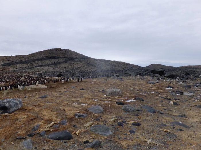 Kuburan massal penguin di Long Peninsula