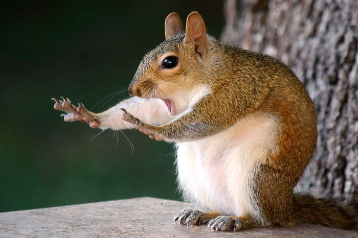 Pose lucu Tupai - The Comedy Wildlife Photography Awards