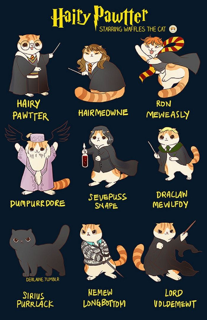 Jika Kucing Menjadi Tokoh Harry Potter