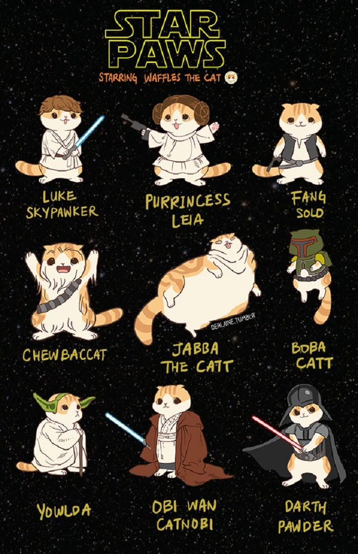 Jika Kucing Menjadi Tokoh Star Wars