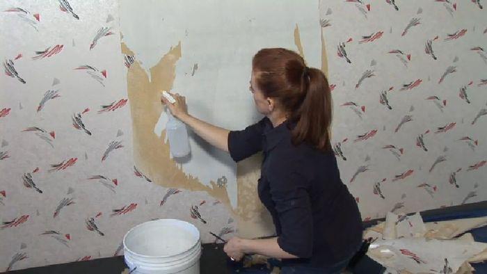 Cat atau Wallpaper