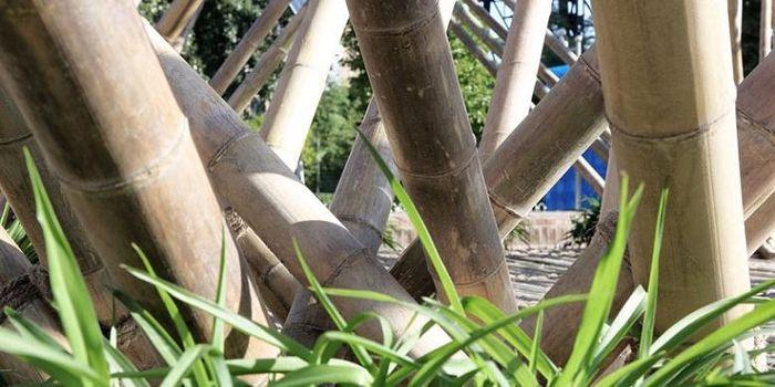 Para arsiteknya memilih bambu sebagai bahan konstruksi utama, karena memiliki akar panjang tradisional di Tiongkok. Bambu juga merupakan bahan bangunan yang fantastis dan keberadaannya sering diremehkan dalam proses konstruksi arsitektur.