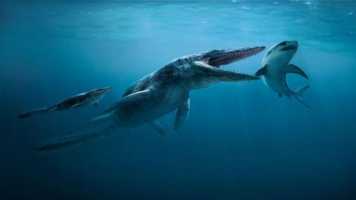 Ilustrasi versi dewasa Tylosaurus