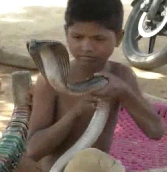 Adiva dan ular kobranya