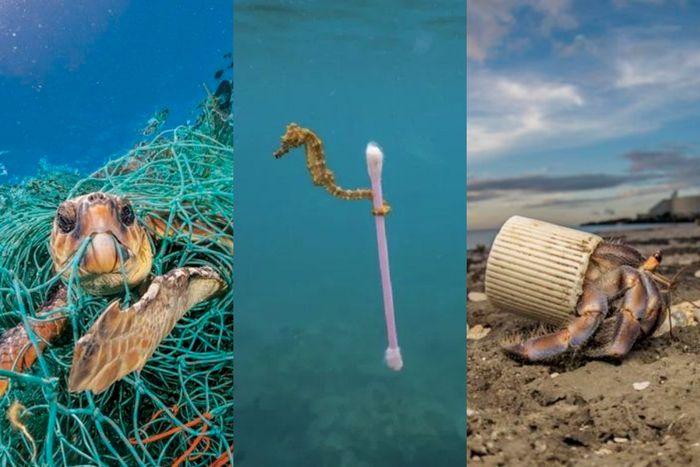 Sampah plastik mengganggu dan membahayakan hewan.