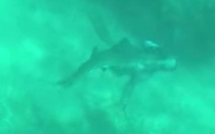 Sebuah foto menunjukkan hiu melakukan serangan dadakan