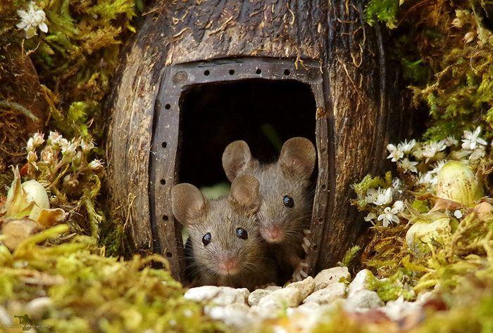 Rumah tikus yang dibuat Simon Dell