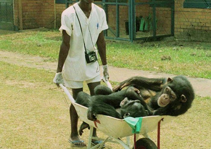 Mereka adalah korban percobaan medis manusia