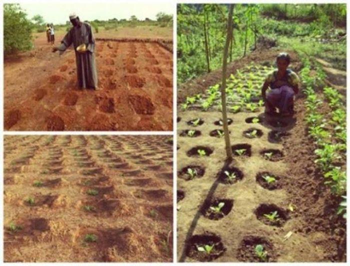Cara Yacouba Sawadogo hijaukan gurun gersang.