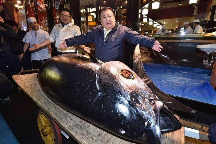 Fantastis! Ikan Tuna Ini Terjual Rp 43 Miliar, Ini Dia Sosok Pembelinya