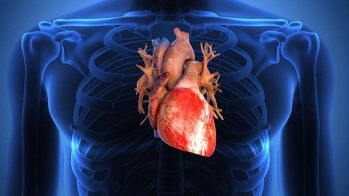 Durian untuk kesehatan jantung