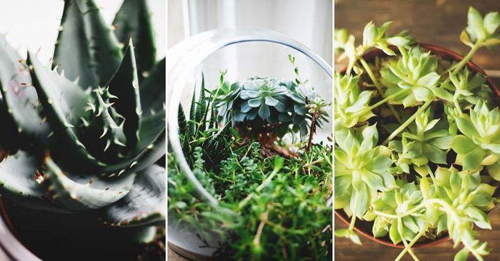 inspirasi tanaman untuk terarium