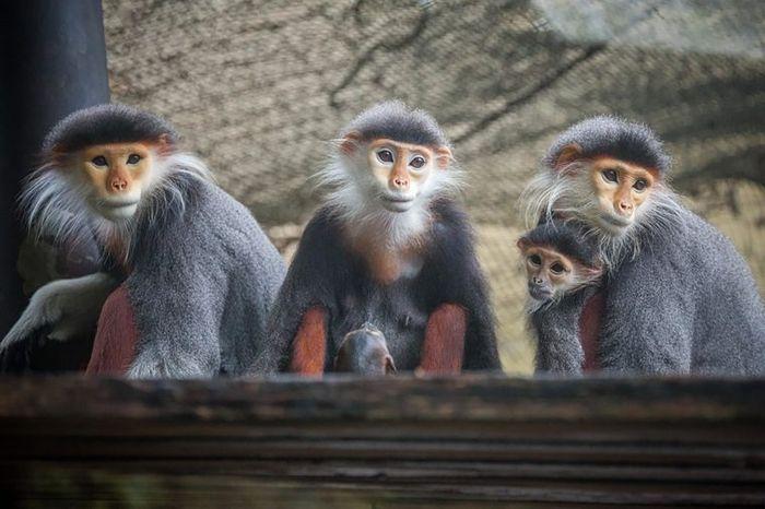 Seorang tamu hotel ingin monyet yang terlatih untuk pembuatan film