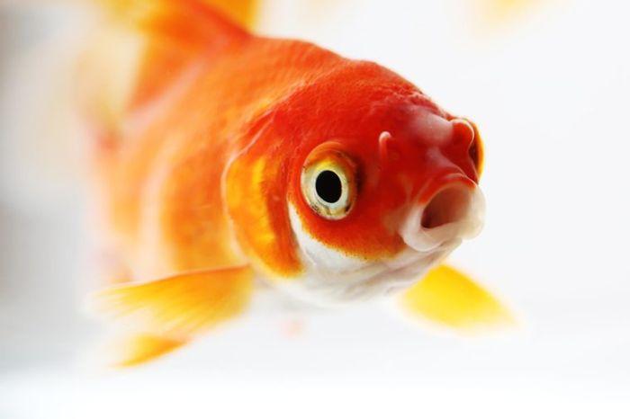 Salah satu tamu hotel ingin agar anak mereka bisa berenang bersama ikan