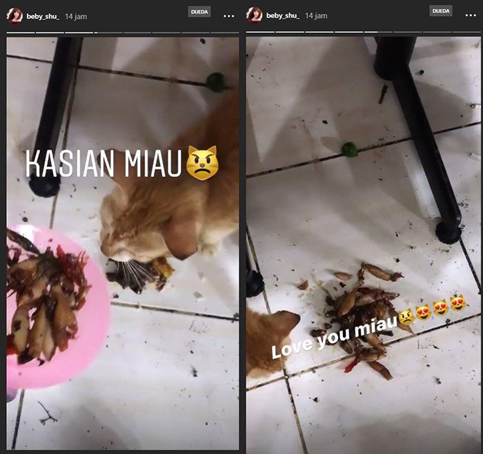 Beby Shu kasih makan cumi satu piring pada kucing