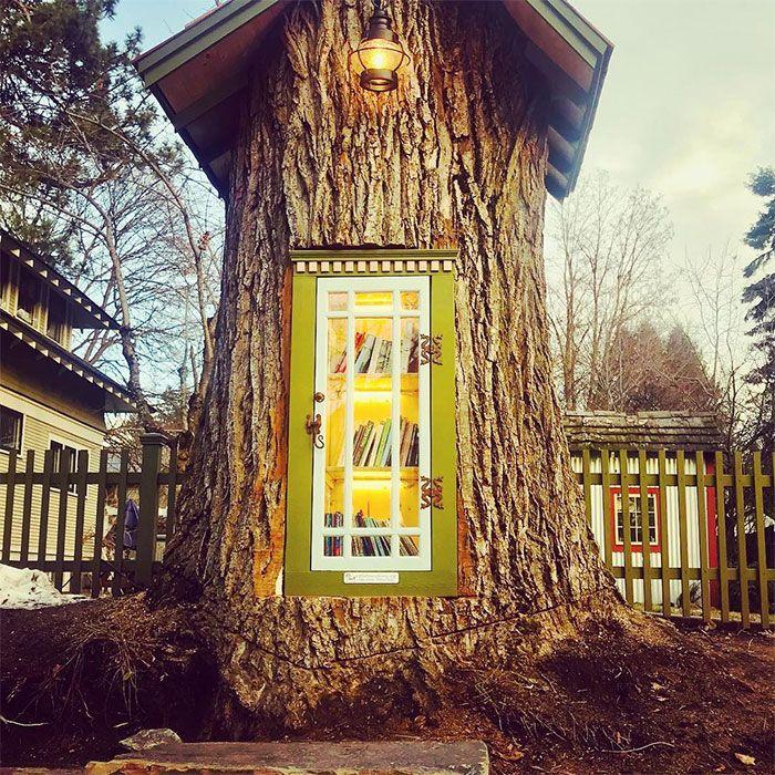 Perpustakaan kecil yang dibuat di batang pohon