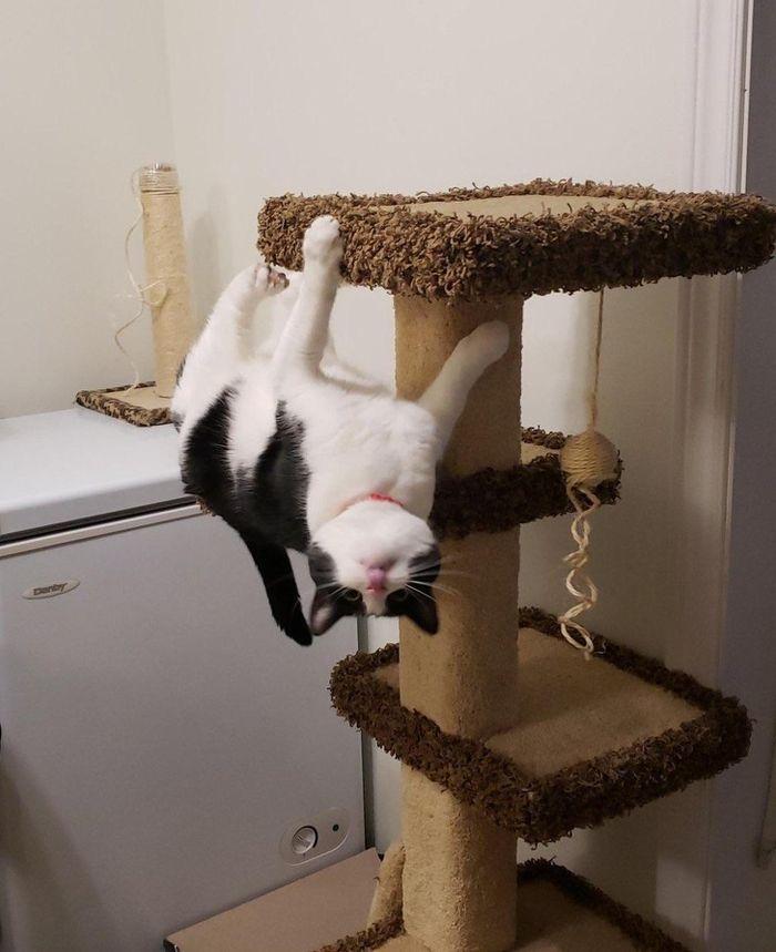 Unduh 78+  Gambar Kucing Ngakak Terbaru Gratis
