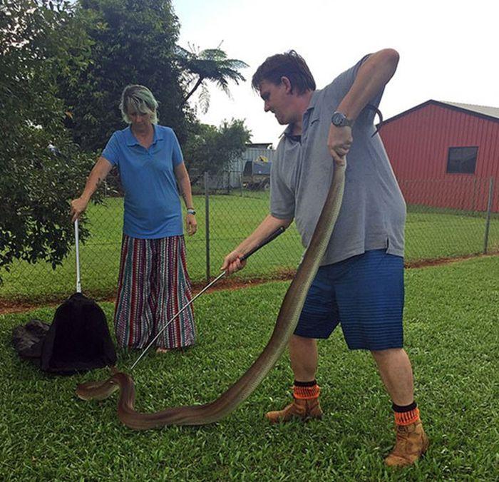 Pawang ular mencoba untuk menangkapnya.