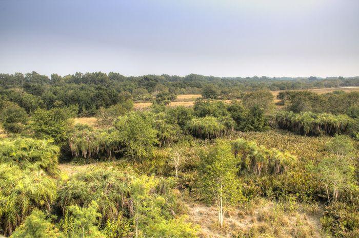 Pemandangan Sundarbans dari atas.