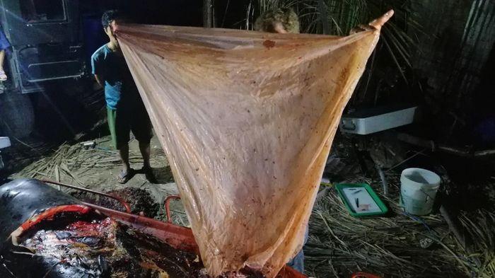 Sampah plastik yang ditemukan di perut paus.