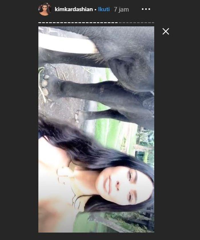 Kim memberi makan seekor gajah saat liburan ke Bali