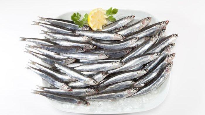 Ingin Pintar Makan Ikan, Seperti Apa Juga Dari Mana? Ini ...