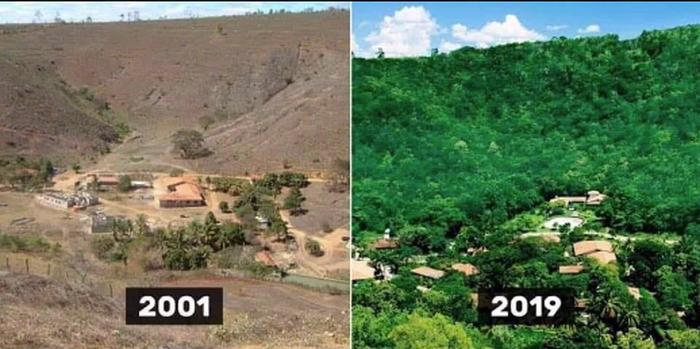 Perbandingan kondisi hutan sebelum dan sesudah ditanami kembali.