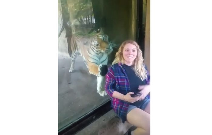 Sadar Wanita di Depannya Tengah Hamil, Inilah yang Dilakukan Harimau dalam Video!