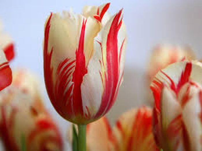 5 Bunga Termahal Di Dunia Harganya Bahkan Ada Yang Mencapai Rp22 Miliar Semua Halaman Hype