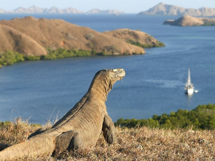 Pulau Komodo, Indonesia