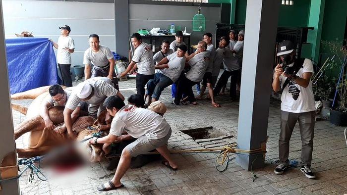 Penyembelihan hewan kurban di kediaman Ayu Ting Ting di kawasan Depok, Jawa Barat, Minggu (11/8/2019).