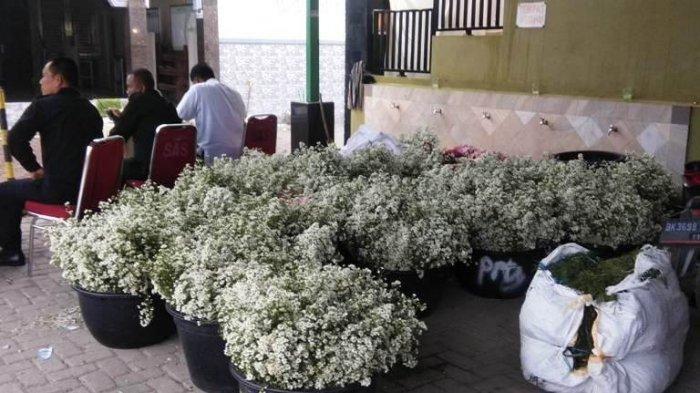 Bunga edelweis yang akan menjadi hiasan di akad nikah Cut Meyriska dan Roger Danuarta