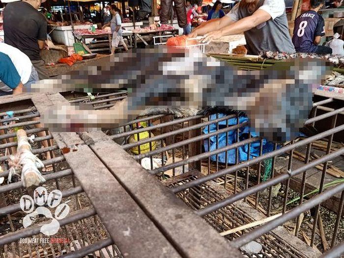 Salah satu contoh anjing yang dibantai untuk diambil dagingnya.