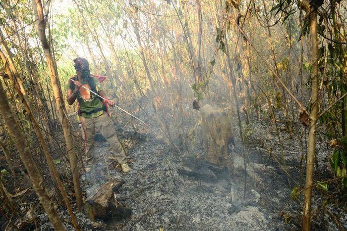 Saat ini pihak Centre for Orangutan Protection fokus menangani api yang mulai memasuki wilayah rehabilitasi.