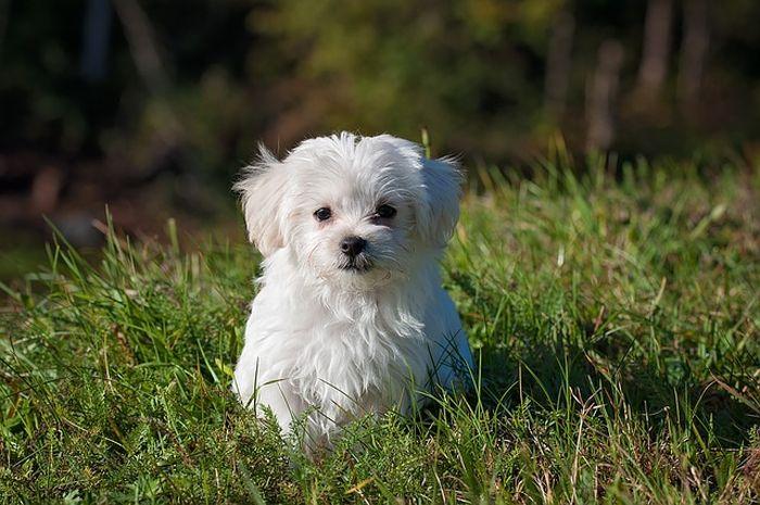 Ilustrasi anjing kecil