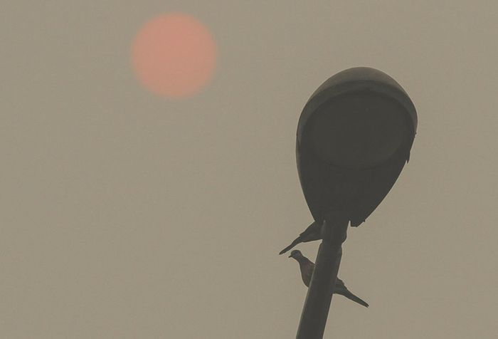 Dua ekor burung bertengger di atas tiang lampu penerangan jalan dengan latar belakang matahari yang terlihat samar akibat pekatnya kabut asap karhutla di Pekanbaru, Riau, Minggu (22/9/2019). Kebakaran hutan dan lahan yang masih terus terjadi di Provinsi Riau membuat Kota Pekanbaru terpapar kabut asa