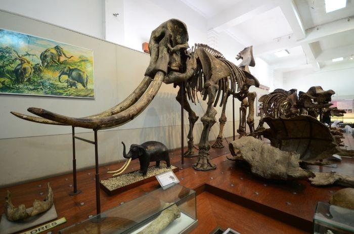 Museum Geologi Bandung berada di bawah pengelolaan Badan Geologi, Kementerian Energi dan Sumber Daya Mineral. Museum ini berdiri sejak 1928.