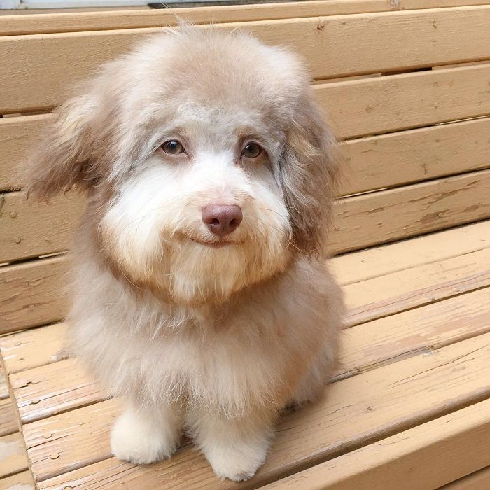 Anjing bernama Nori
